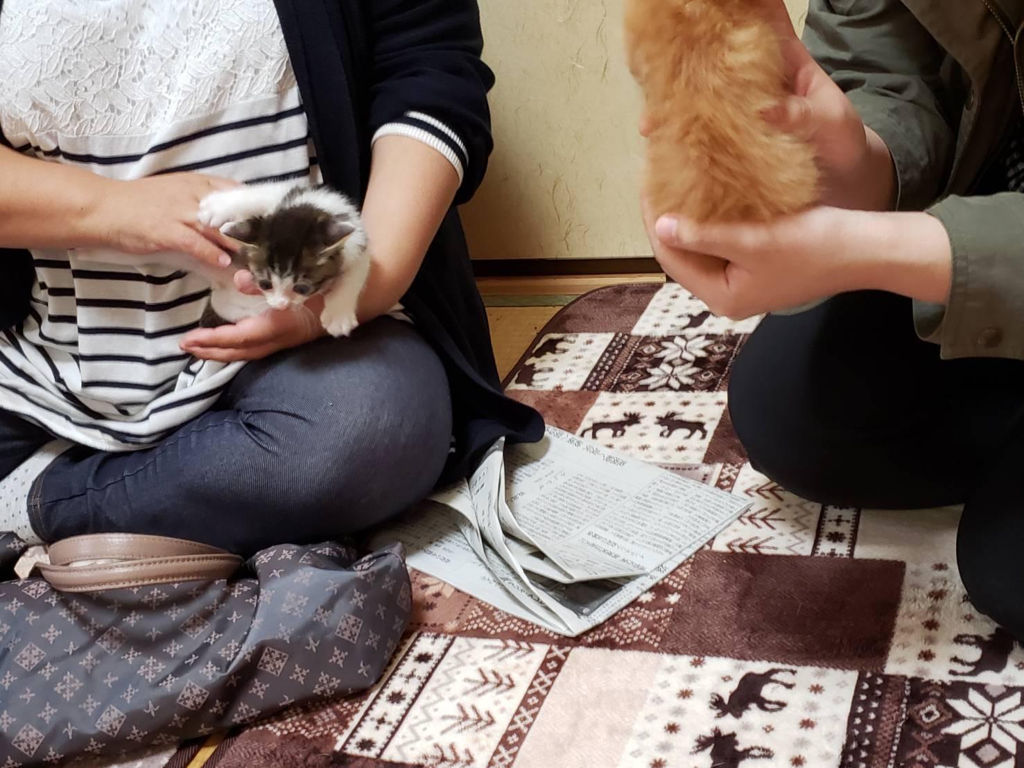 子猫のお見合い_d0179994_13264282.jpeg