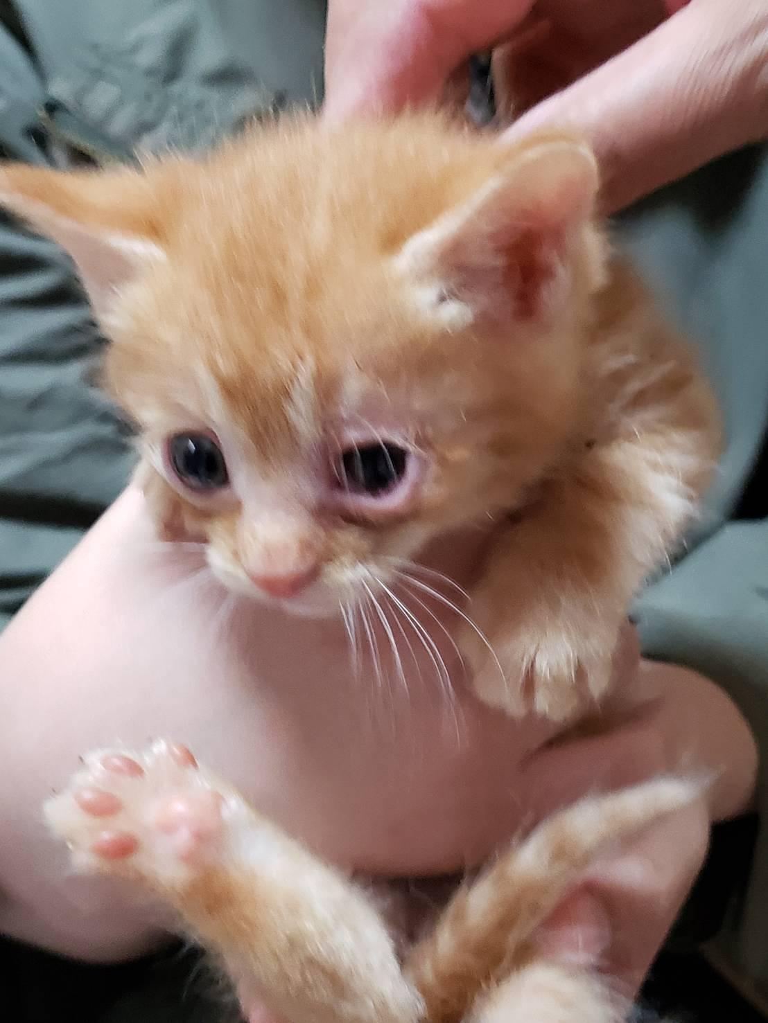 子猫のお見合い_d0179994_13271995.jpeg