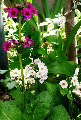 今日の庭 & 茶々情報♡_e0167795_16401203.jpg