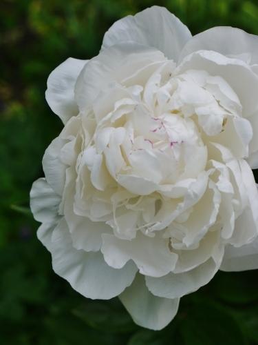 今日の庭 & 茶々情報♡_e0167795_16403781.jpg