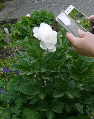 今日の庭 & 茶々情報♡_e0167795_16405035.jpg