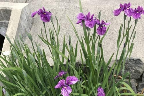 デイの皆さんが作られた花器!_f0139520_21550619.jpg
