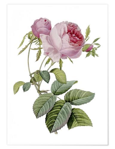 開花 Blooming〜ジュリアーニの見たバラは(続編)_e0103327_11502415.jpg