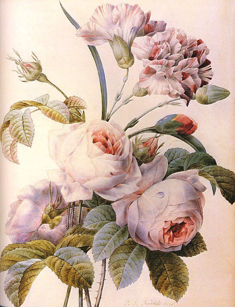 開花 Blooming〜ジュリアーニの見たバラは(続編)_e0103327_1151913.jpg