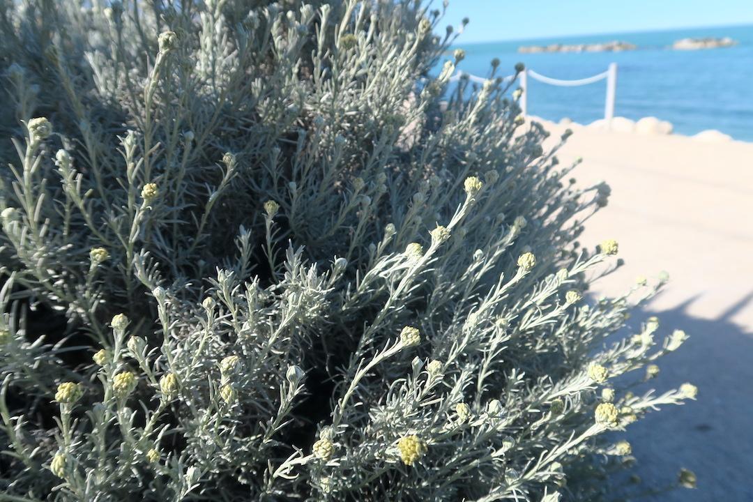 アドリア海青い海辺を歩く午後、ペダーソ_f0234936_6161137.jpg