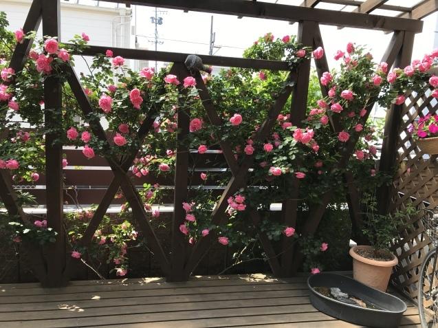 令和初の薔薇 たくさん咲いてくれました。_e0184559_15444340.jpeg