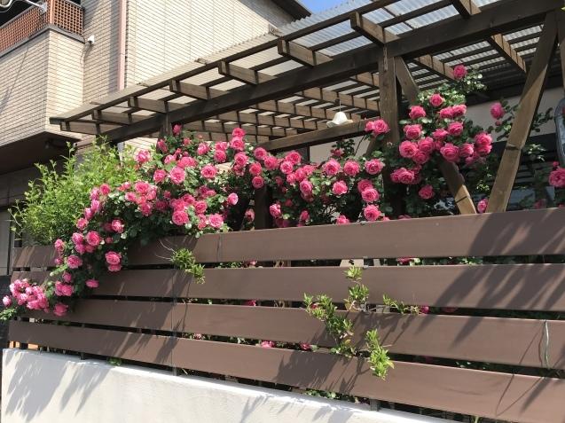 令和初の薔薇 たくさん咲いてくれました。_e0184559_15463929.jpeg
