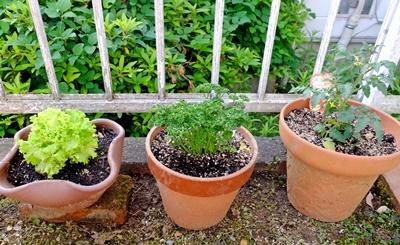 お庭の大掃除_b0194861_15411207.jpg