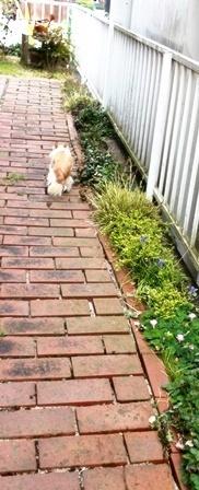 お庭の大掃除_b0194861_16235791.jpg