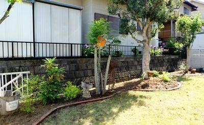 お庭の大掃除_b0194861_16490652.jpg