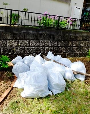 お庭の大掃除_b0194861_16492763.jpg