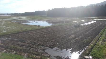 猪苗代の水田は、ほぼ田植えが終了していました。_c0160368_20072074.jpg