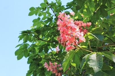 花盛りの弘前城植物園へ_2019.05.22_d0131668_13173661.jpg