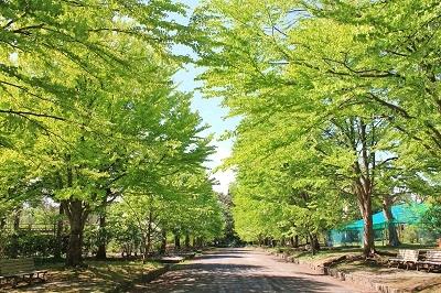 花盛りの弘前城植物園へ_2019.05.22_d0131668_13174850.jpg