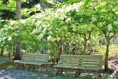 花盛りの弘前城植物園へ_2019.05.22_d0131668_13182014.jpg