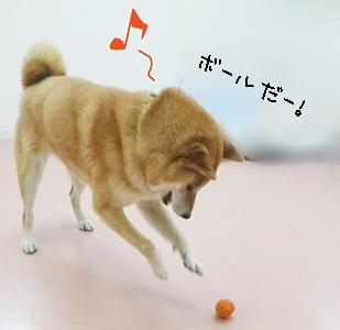 ボール遊び!_f0357682_11572491.jpg
