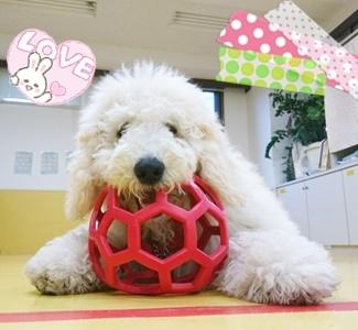 ボール遊び!_f0357682_11573073.jpg