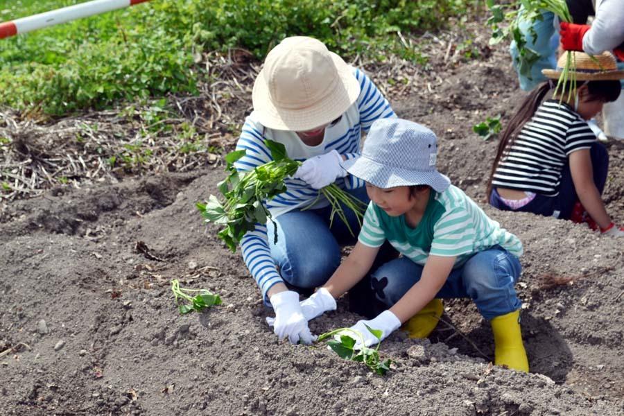 芋の苗植えを行いました。_d0353789_15250227.jpg