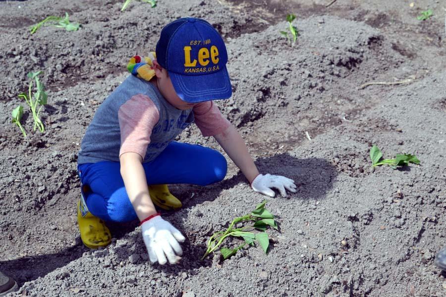 芋の苗植えを行いました。_d0353789_15250998.jpg