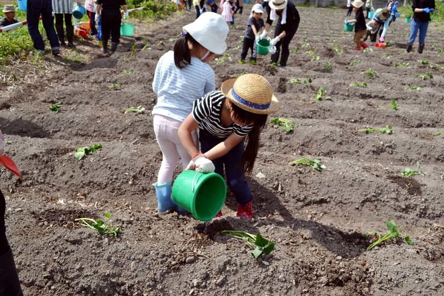 芋の苗植えを行いました。_d0353789_15251643.jpg