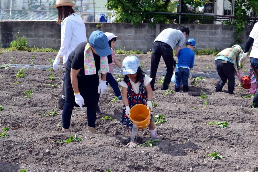 芋の苗植えを行いました。_d0353789_15252209.jpg