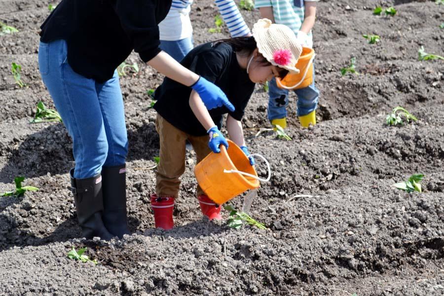 芋の苗植えを行いました。_d0353789_15252869.jpg