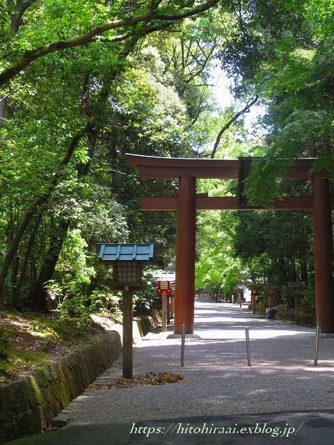 奈良 石上神宮 の鶏_f0374092_13052543.jpg