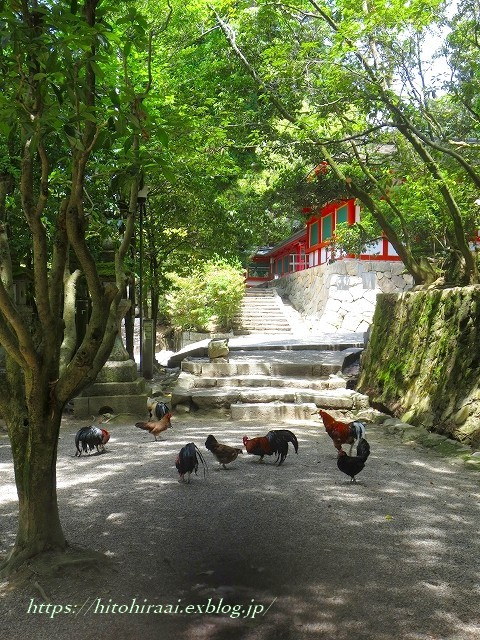 奈良 石上神宮 の鶏_f0374092_13252018.jpg