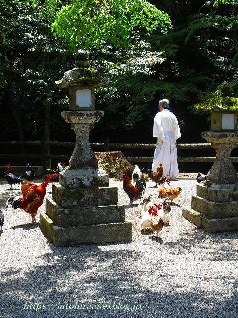 奈良 石上神宮 の鶏_f0374092_13331272.jpg