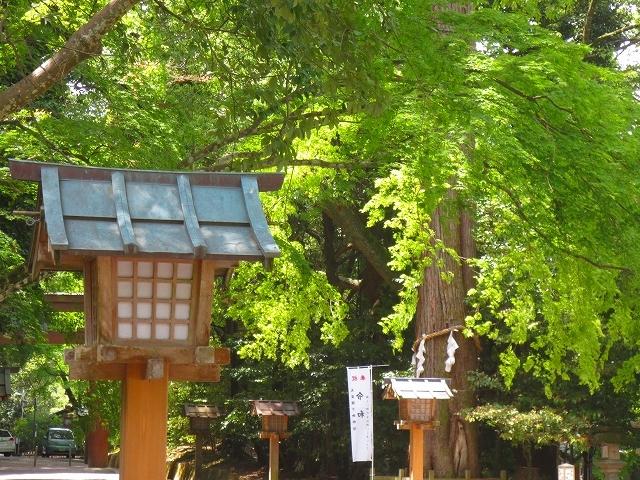 奈良 石上神宮 の鶏_f0374092_13350055.jpg