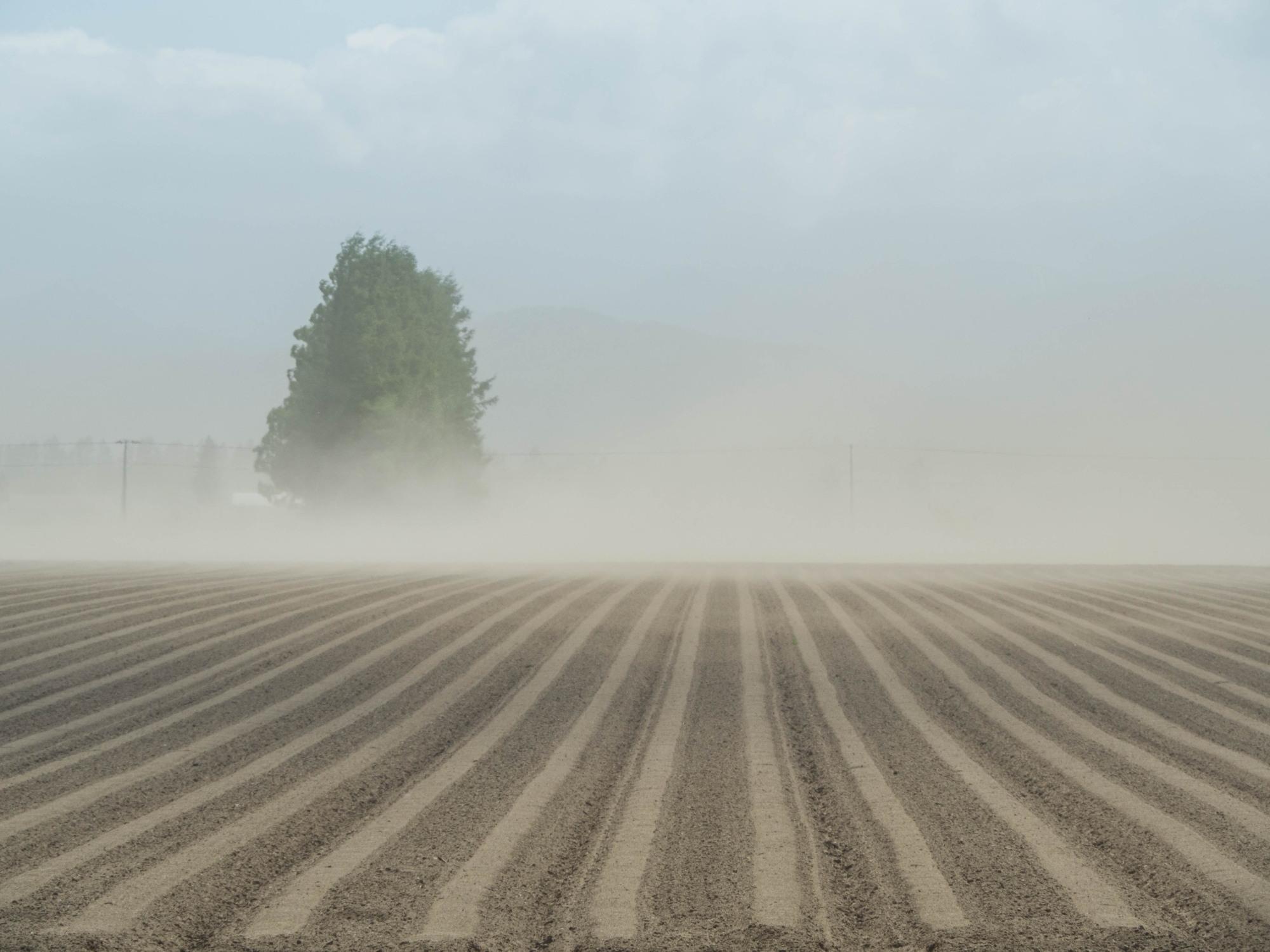 強風と激しい砂嵐の中・・チューリップを観に紫竹ガーデンへ。_f0276498_00205265.jpg