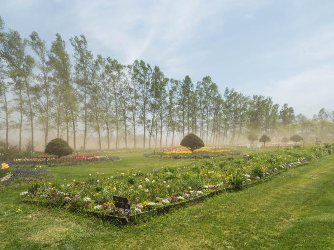 強風と激しい砂嵐の中・・チューリップを観に紫竹ガーデンへ。_f0276498_00355485.jpg