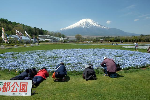 富士山とネモフィラ♪_f0179404_21084310.jpg