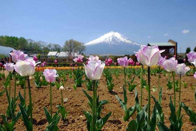 富士山とネモフィラ♪_f0179404_21103290.jpg