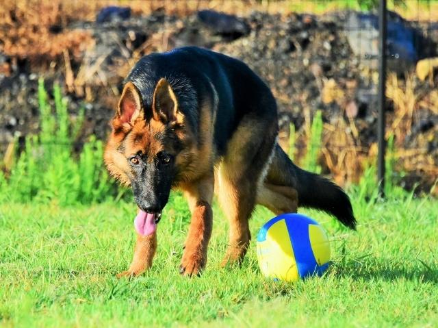 オオカミのようだ_d0360206_01285558.jpg