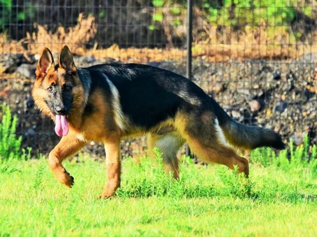 オオカミのようだ_d0360206_01285983.jpg