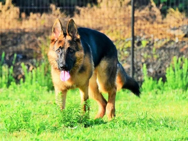 オオカミのようだ_d0360206_01290796.jpg