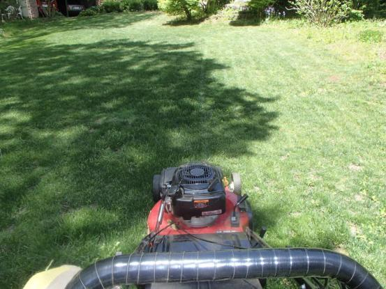 芝刈りと草刈りデー_f0064906_16234303.jpg