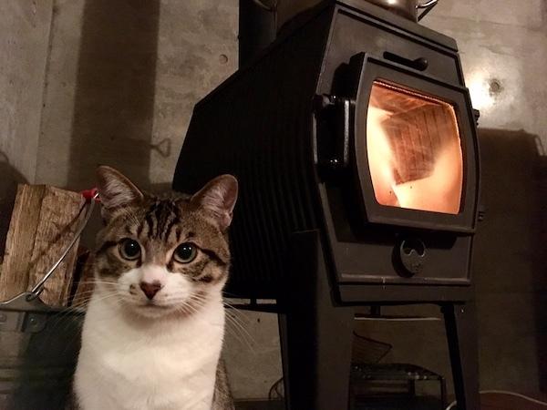 猫の家_b0038919_16452293.jpg