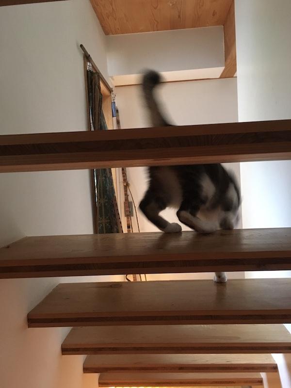 猫の家_b0038919_16454447.jpg
