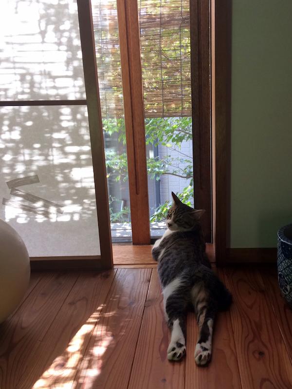 猫の家_b0038919_16460408.jpg
