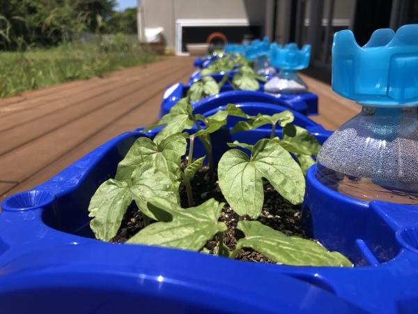 野菜が育ってます_a0131631_18510855.jpeg