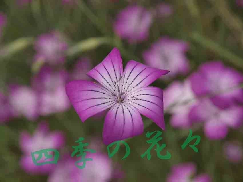 d0273732_17360636.jpg