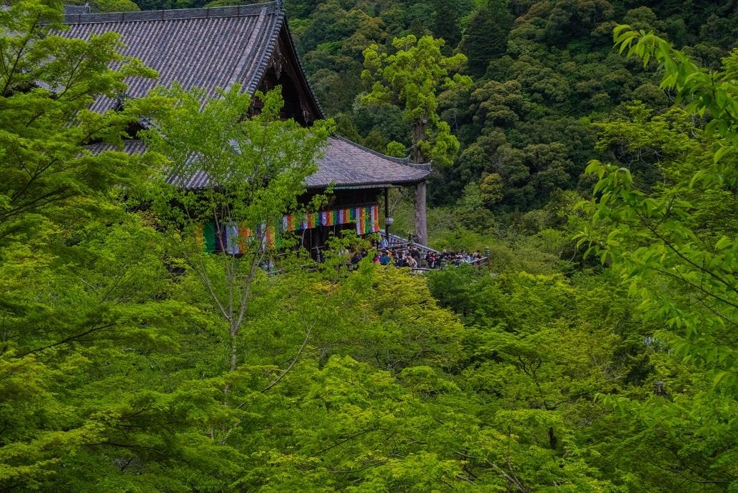 長谷寺のぼたんまつり_e0363038_13092092.jpg