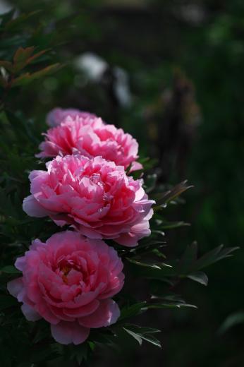 春の庭。_c0179360_14004052.jpg