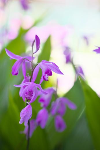 春の庭。_c0179360_14004805.jpg