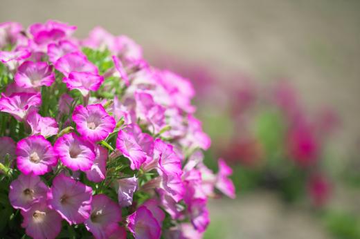 春の庭。_c0179360_14011675.jpg