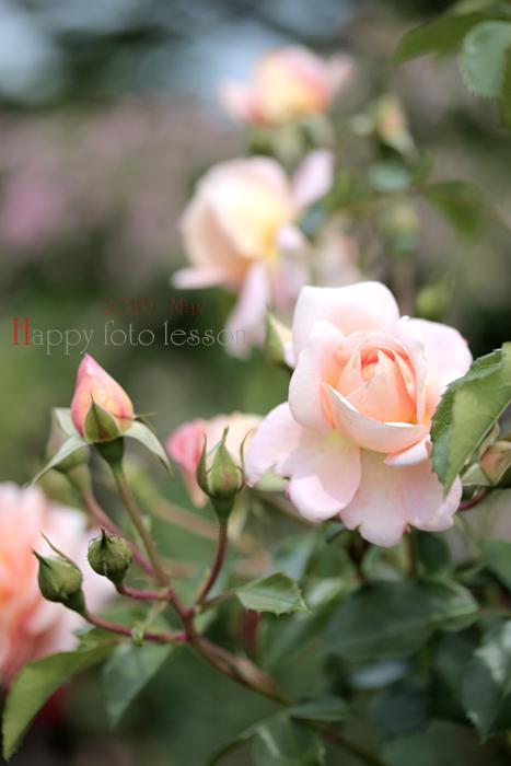 happyフォトレッスン 薔薇②_f0306287_23260679.jpg