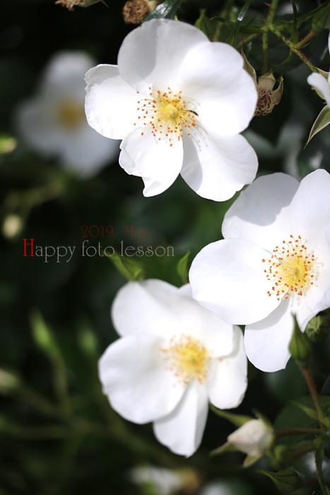happyフォトレッスン 薔薇②_f0306287_23264776.jpg