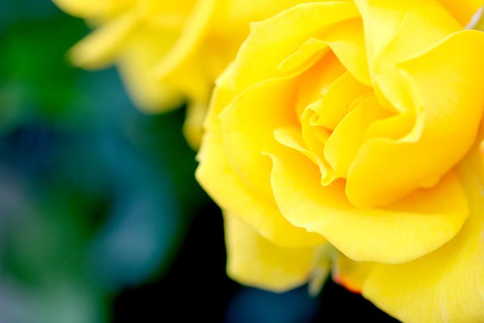 happyフォトレッスン 薔薇②_f0306287_23295653.jpg
